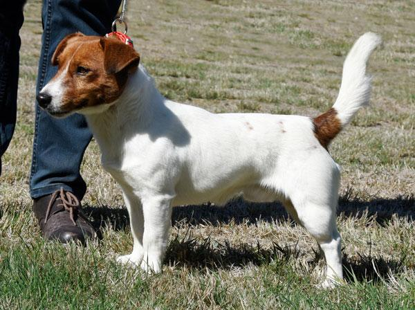 Riverlands Captain  -  DOB 15/1/2015.   Sire: Aiden Red Sambuca.  Dam: Bekmar Ricki Lee Jones.
