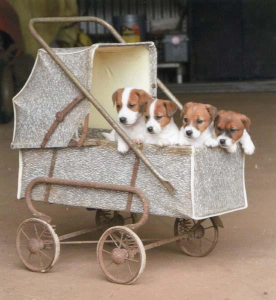 Recent puppies enjoying a ride