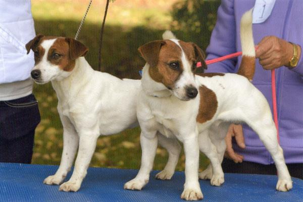 LEFT - Haven Park Penny RIGHT - Haven Park Prince George DOB: 11/7/13  Sire: Casmare Mudeye Mick  Dam: Haven Park Toby