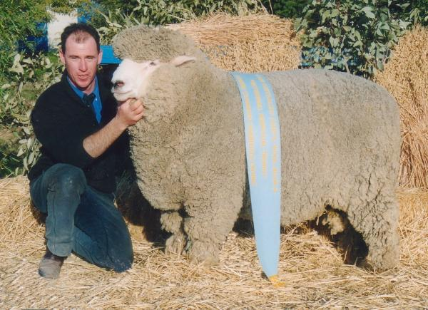 AVANTE GARDE - Supreme Champion Sheepvention & ASSBA Bendigo 2003. Also Supreme Champion at Sheepvention 2002 and 2004 - the only Corriedale Ram to achieve this.