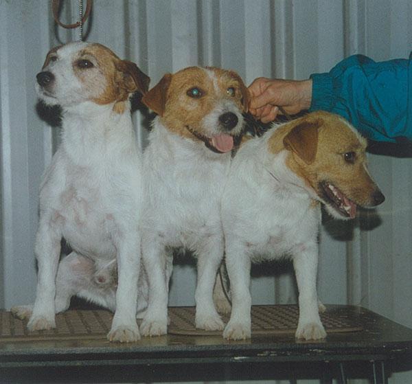 Maroy Roberly Dec., Maroy Bootie Belle, Maroy Tinka Belle - Roy & Marg Baldock - Progeny 1996