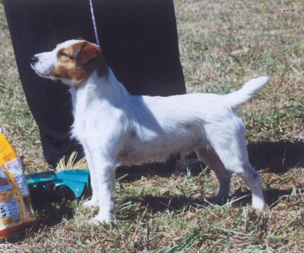NSW State Show 1999, Best Dog in the Show - Kelston Lord Russell, Owner Dianne Corr