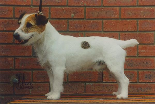 Eureka Myrddin an Dara owned by Jean Smullen, CHampion Lure Racer
