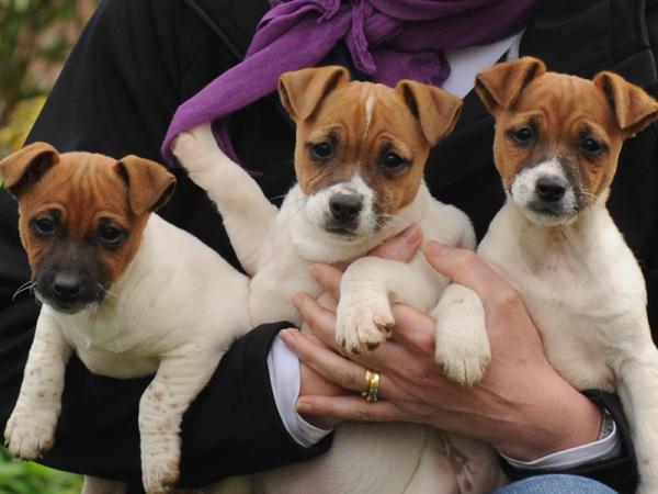 Recent Puppies